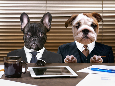 Business dogs in suits at work behind the office table. The concept of manager and subordinate, different characters, office workers