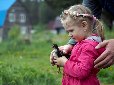 Little girl holding a little black chick. Male hand embrace, support. Background green meadow, village houses