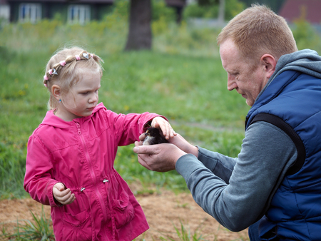 Man shows girl small chicken. Father and daughter. The village, village houses background, green grass. Girl petting chick