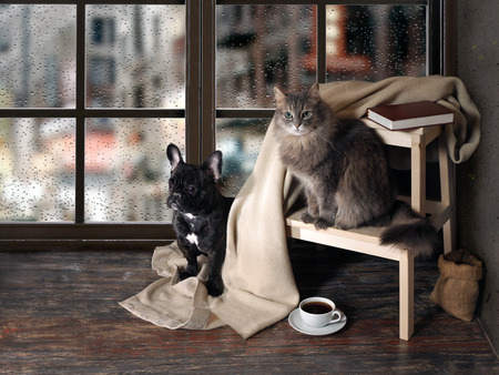 Comfortable room with panoramic window. Dog and cat sitting at the ladder, book, cup of coffee, plaid 스톡 콘텐츠