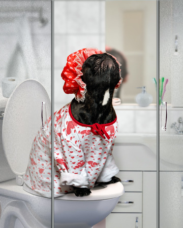 Funny Dog in a shower cap and pajamas sitting on the toilet in the bathroom. Concept - pet toilet training, cleanliness and care of the pets