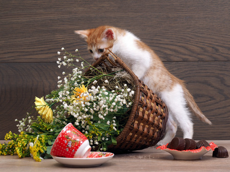 Kitten is playing - drops her basket of flowers. The inverted teacup. Cat made a mess on the table Standard-Bild