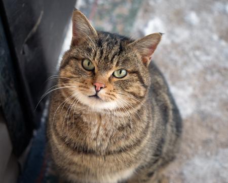 emotive: Emotive portrait of a cat with huge eyes
