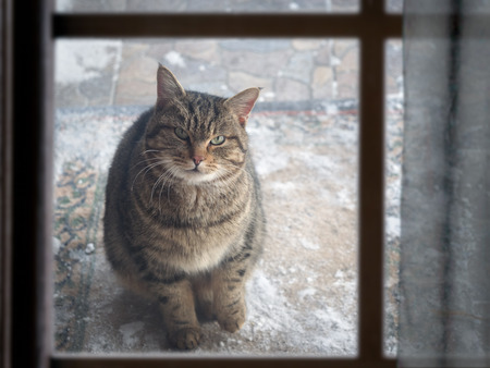 stray cat sits outside and looks out the window of the house. Winter, snow. Cat is cold. The problem of stray animals