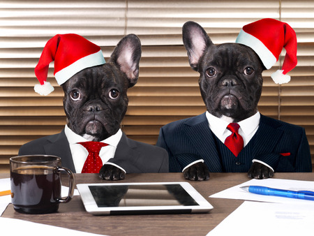 Dogs in the office in the new caps. The concept of a Christmas party, work on holidays