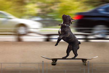 Funny dog riding a skateboard