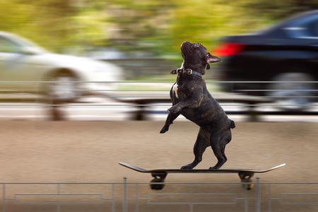 Grappige hond die een skateboard berijdt Stockfoto