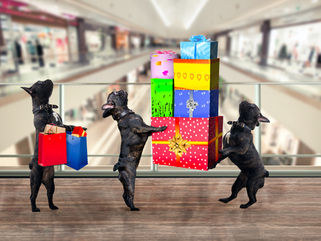 Dogs in the Mall. Are a lot of gifts and purchases Stock Photo