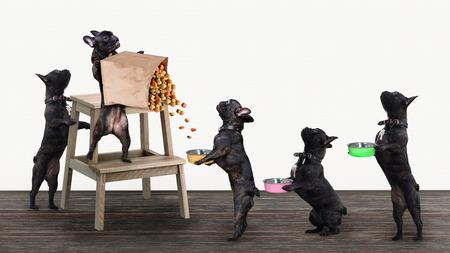 Perros graciosos hacen cola para comida con cuencos en sus patas