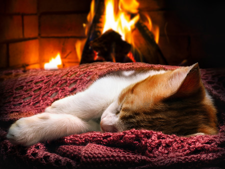 Sleeping kitten, fireplace, fire. Cat-a symbol of comfort, warmth, tranquility in the home Stok Fotoğraf