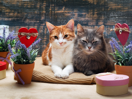 he is different: Two cats surrounded by flowers and hearts