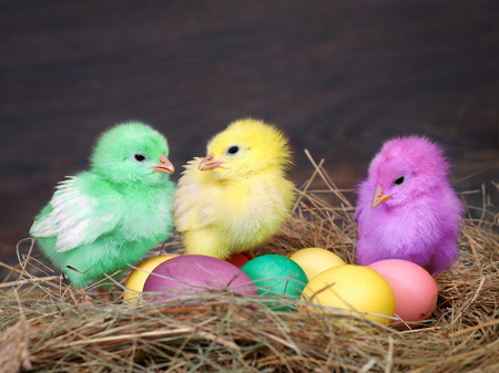 Bright colored chickens. Easter eggs. Chicken coop, hay