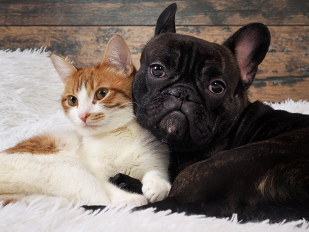 cat and dog together. Cute Pets. Portrait
