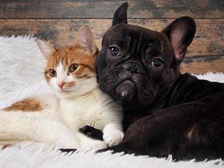 gato y perro juntos. Tiernas mascotas. Retrato