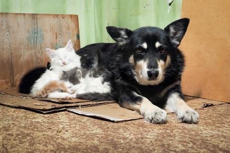 Perro callejero y gatitos. Rincón sucio del granero, cartón roto