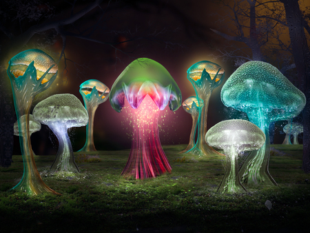 Fabulous mystical mushrooms in the forest. Bright glow