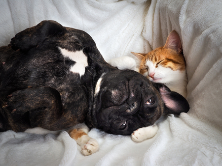 Dog and cat funny lying on a white blanket 스톡 콘텐츠