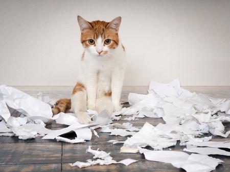 Il gatto divertente faceva un disordine, strappò la carta
