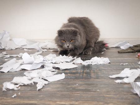 Il gatto arrabbiato strappò i giornali importanti e fece un disastro sul pavimento
