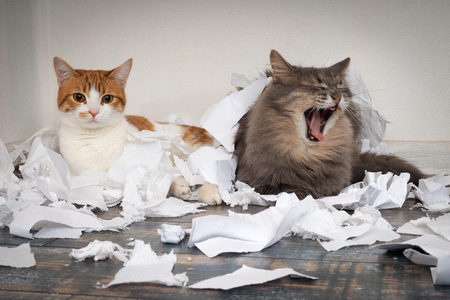 Cats tore up important papers and made a mess on the floor. Cat yawns