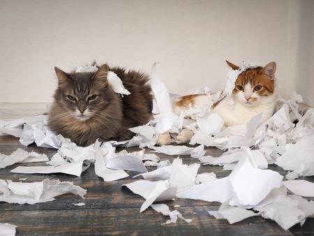 Gatto e gattino giocati. Gli animali strapparono carte importanti e fecero un casino sul pavimento