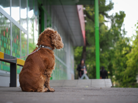 dog tied up outside a shop. waiting for the owner