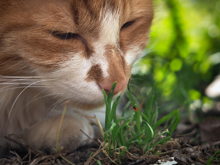 The cat sniffs the grass. The blade of grass crawling tick encephalitis. A dangerous insect, a carrier of the disease