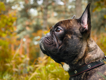 dog with a mosquito on your nose. The mosquito drinks blood. Nature, forest Standard-Bild