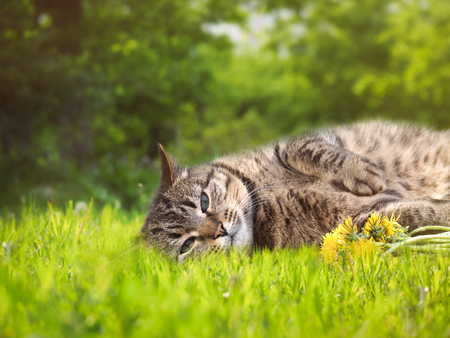 A happy cat is lying in the green grass Stock Photo