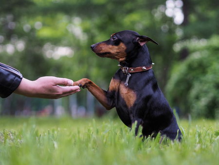 개는 발 남자를 준다. 애완 동물과 소유자의 우정의 개념, 충성도와 헌신. 자연, 푸른 잔디