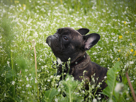 The dog in the tall grass among the flowers.