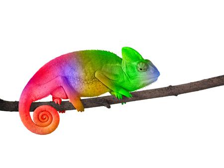 camaleón en una rama con una espiral de arco iris brillante de color brillante de la silueta del arco iris Foto de archivo