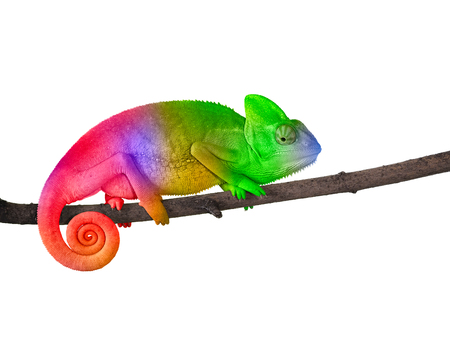 Chameleon on a branch with a spiral tail. Bright colorful rainbow color scales Stock fotó
