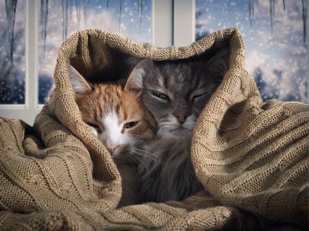 Dos gatos se esconden debajo de la manta. Afuera, la nieve invernal. El concepto de confort hogareño, seguridad, calidez Foto de archivo