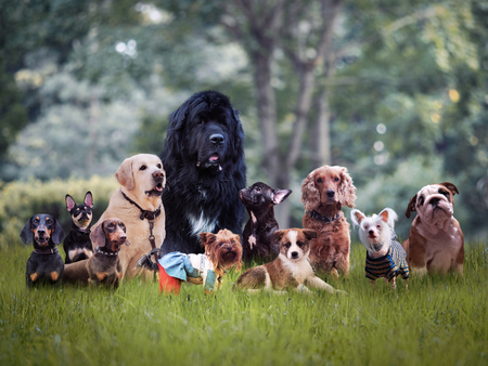 Many different breeds of dogs on the grass