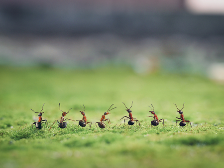 Seven ants on moss. Macro. Insects stand in a row 스톡 콘텐츠