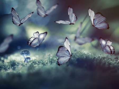 Huge butterflies and the little glowing mushrooms in the woods. The picture on the subject of fantasy