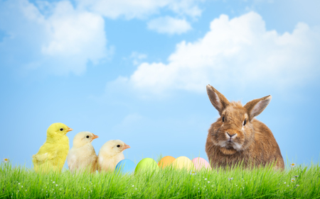 Easter eggs, chickens and rabbit. Sky, grass Stock Photo