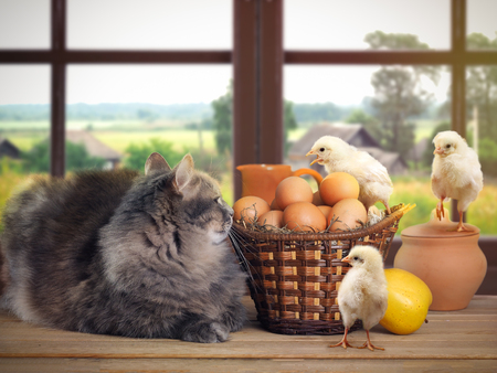 Funny Easter still life with a cat, chickens and eggs Stock Photo