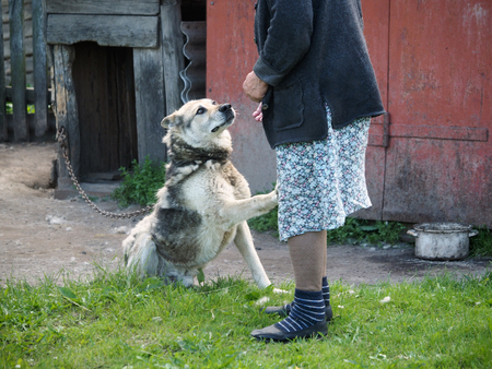 A touching moment-the dog gives a paw to the old woman. The country yard, old house