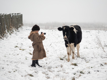 A little girl takes pictures of a cow. Snow, winter Banco de Imagens