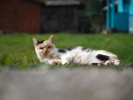 The cat is lying in the green grass. Animal basking in the sun