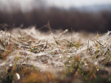 The grass is covered with frost. The sudden cold change in the weather Banque d'images - 115398571