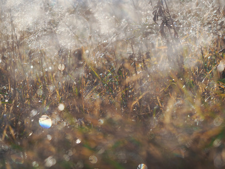 Background - grass in frost. The sudden cold change in the weather