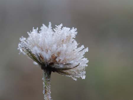 Plant in frost. Macro. The sudden cold change in the weather