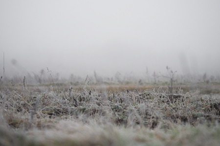 The grass is covered with frost. The sudden cold change in the weather Imagens