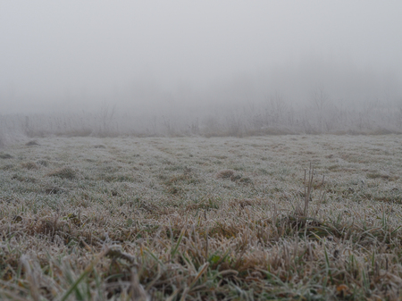 The grass is covered with frost. The sudden cold change in the weather Banco de Imagens