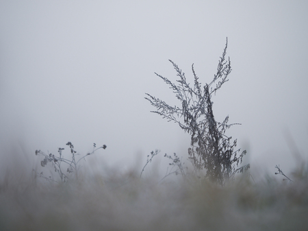 The grass is covered with frost. The sudden cold change in the weather Banque d'images - 115398625