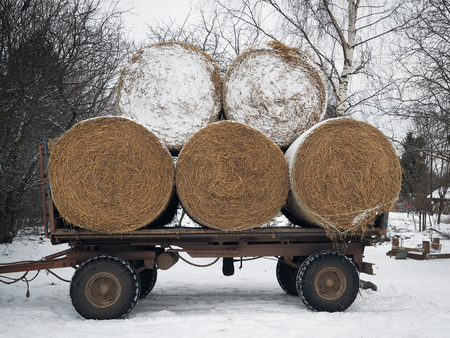 Old tractor cart with rolls of straw. Winter, snow