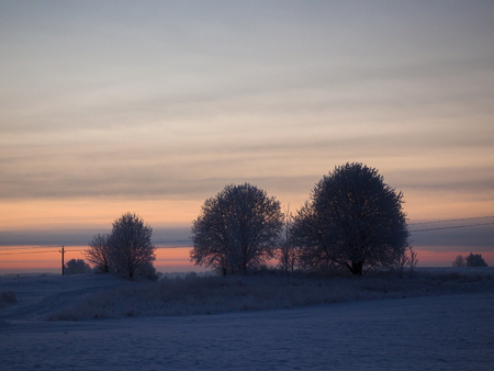 Winter landscape. Trees and grass in the ice. Rural road, field.